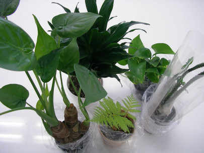 Nasa S Top 10 Air Cleaning Plants Pollution Solutions Online
