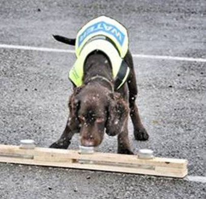 Water Company Recruits Sniffer Dog in War on Leaks