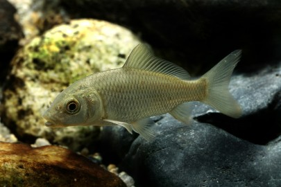 Can Fish Survive in Polluted Water?