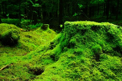 Can Moss Reduce Air Pollution Levels?