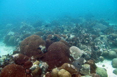 Reef-building corals transmit epigenetic adaptations to their offspring that can combat the effects of global warming